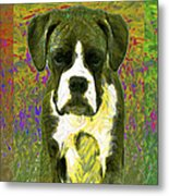 Boxer Three 20130126 Metal Print by Wingsdomain Art and Photography