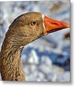 Brown Goose Metal Print by Thomas  MacPherson Jr