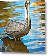 Brown Pelican Along The Bayou Metal Print