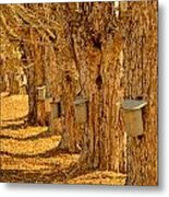 Buckets Of Gold Metal Print by Melanie Leo