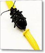 Bug On The Cob Metal Print by Amy Cicconi