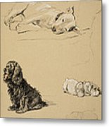 Bull-terrier, Spaniel And Sealyhams Metal Print by Cecil Charles Windsor Aldin