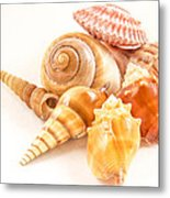 Bunch Of Shells Metal Print by Jean Noren