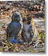 Calico Cat And Obtuse Owl Metal Print by Al Powell Photography USA