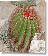 California Beauty Metal Print by Christine Till