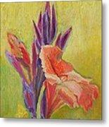 Canna Lily Metal Print by Janet Ashworth