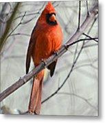 Cardinal In A Tree Metal Print by Susan Leggett