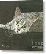 Cat On Black Metal Print by Bill Hubbard