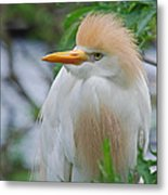 Cattle Egret Metal Print by Skip Willits