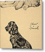 Chow And Spaniel, 1930, Illustrations Metal Print by Cecil Charles Windsor Aldin