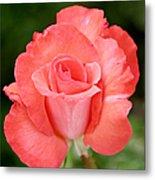 Cobra Rose  Metal Print by Christine Till