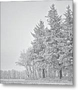 Cold Lace Metal Print by Odd Jeppesen