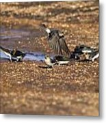 Collecting Mud Metal Print by Douglas Barnard