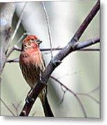 Colorful Bird In Winter Metal Print by Susan Leggett