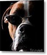 Cool Dog Metal Print by Jt PhotoDesign