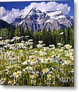 Daisies At Mount Robson Metal Print by Elena Elisseeva