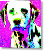Dalmation Dog 20130125v1 Metal Print by Wingsdomain Art and Photography