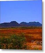 Desert Field Metal Print by Rebecca Christine Cardenas
