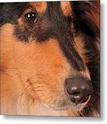 Dog Portrait Metal Print