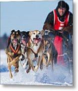 Dog Sledding Race Metal Print