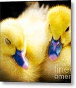 Downy Ducklings Metal Print