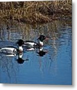 Drakes A Pair Metal Print by Skip Willits