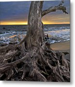 Driftwood On Jekyll Island Metal Print by Debra and Dave Vanderlaan
