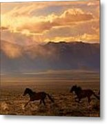 Elusive Wild And Free Mustangs Metal Print by Jeanne  Bencich-Nations