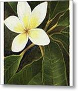 Everywhere In Hawaii Metal Print by Nancy Edwards