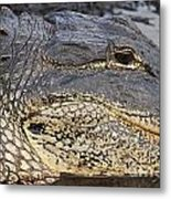 Eye Of The Gator Metal Print by Adam Jewell