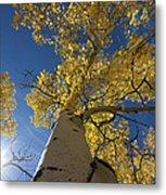 Fall Tree Metal Print by David Yack