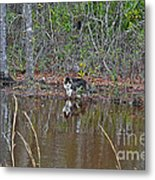 Fishing Feline Metal Print