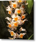 Flower - Orchid - Dendrobium Orchid Metal Print
