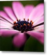 Focus On The Middle Metal Print by Kim Lagerhem