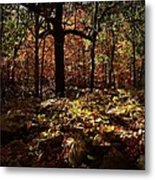 Forest Illuminated Metal Print