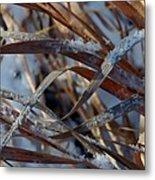 Freeze Dried Metal Print by Steven Milner