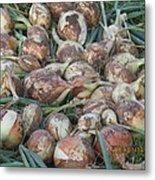 Fresh Harvest Onions Metal Print