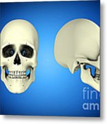 Front View And Side View Of Human Skull Metal Print by Stocktrek Images