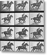 Galloping Horse Metal Print by Eadweard Muybridge