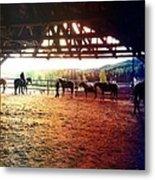 Glory In Horses Metal Print