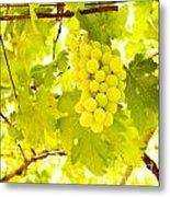 Grape Branch Metal Print