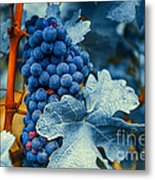 Grapes - Blue  Metal Print by Hannes Cmarits