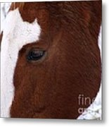 Grazing Horse  Metal Print by Kimberly Maiden
