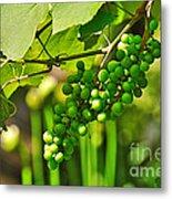 Green Berries Metal Print by Kaye Menner