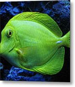 Green Fish Metal Print