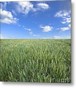 Greens And Sky Metal Print by Boon Mee