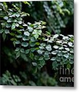Greens Metal Print by Dan Holm