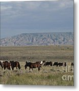 Herd Of Wild Horses Metal Print by Juli Scalzi