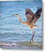 Heron Boca Grande Florida Metal Print by Fizzy Image