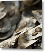 Honesty Seeds Metal Print